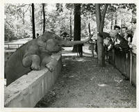 Elephant Eating At the Bronx Zoo