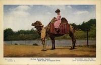 Riding animals, camel. New York Zoological Park