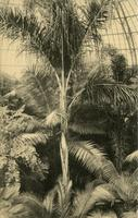 Palm House, Botanical Garden, N.Y. City