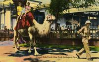 Camel Ride track, New York Zoological Park