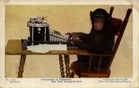 Chimpanzee at typewriter. New York Zoological Park