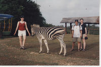 Group of students, zebra