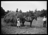 Loading hay, Bensonhurst, Brooklyn, New York City, June 1900.