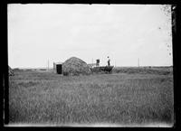 Gathering salt hay, location unidentified (Brooklyn?), undated (ca. 1882-1919).