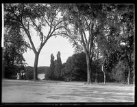 Unidentified view of Central Park, New York City, undated (ca. 1882-1900).