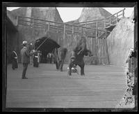 Elephants performing at Bostock's Wild Animal Show, Pan American Exposition, Buffalo, New York, 1901.