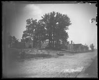 Alexander Hamilton's thirteen trees after the removal of Hamilton Grange, New York City, undated (ca. 1889-1919).