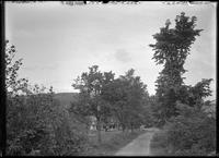 Path in unidentified woods, Great Barrington, Massachusetts, September 1903.