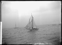 Unidentified sloop yacht taking part in an ocean race (probably the Americas     Cup), September 7, 1895.