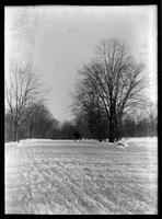 Sleigh-riding in an unidentified park, New York City, undated (ca. 1890-1900).