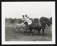 Unidentified children and woman in cart drawn by ponies, undated [circa 1900-1910].