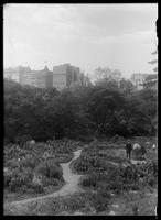 Shakespeare Garden, Central Park, New York City, undated (ca. 1913-1919). Universalist Church and the New-York Historical Society visible in the distance.