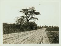 Flatbush: Canarsie Lane (now Cortelyou Road), 150 feet east of Brooklyn Avenue near E. 47 Street, 1922.