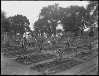 Children working in the school garden in Isham Park, New York City, August 5, 1914.