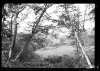 Manhasset / Roslyn / Little Neck / Douglaston / Alley Road, Long Island: [unidentified clearing in woods, undated.]
