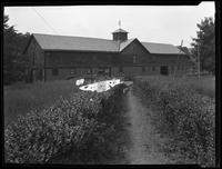 Barn, C.S Bryan property, Galbreath, New Windsor, N.Y., undated (ca. 1920). Photographed for Joseph P. Day. Some emulsion damage to neg.