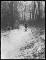 William Gray Hassler (little boy, distant) pulling his sled through snowy woods, ca. 1912.