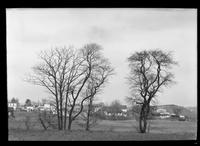 Two bare trees in an empty field, with unidentified houses in the background, undated.