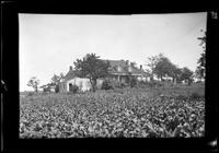 Amagansett / Wainscott, Long Island: [unidentified farm with field of crops in foreground, undated.]
