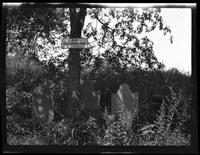 Newtown: [three old, unidentified tombstones in overgrown field under a tree, undated.]