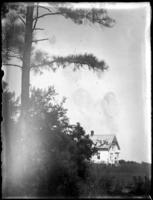 Unidentified house with pine trees in foreground, undated (ca. 1920).