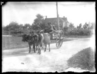 Two African-American men in an oxcart, Savannah, Georgia or Jacksonville, Florida, undated, (ca. 1920).
