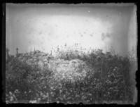 Unidentified field with wildflowers and the remains of a dry stone wall, undated (ca. 1920-1925).