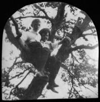 Two unidentified boys sitting in a tree, undated (ca. 1905-1915)