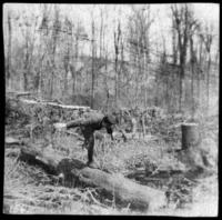 Unidentified boy standing on a log in winter woods, undated (ca. 1900-1909).