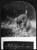 Unidentified boy (possibly Fritz E. Bjorkman) picking up sticks in the woods, undated (ca. 1900-1909)