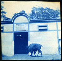Bison in its enclosure at the Central Park menagerie, New York City, undated (ca. 1900-1909).