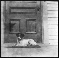 Dog 'Nellie' on an unidentified front porch, undated (ca. 1900-1909).