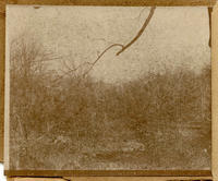 Unidentified view, Central Park, New York City, undated [c. 1897-1902].