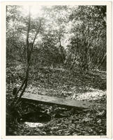 Bailey Spring, Kingsbridge Road 600 feet west of Sedgwick Avenue, near Heath Avenue, Bronx, New York, October 10, 1897.