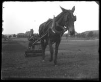 Horse-drawn lawn mower, Fort Slocum, New York, 1898.