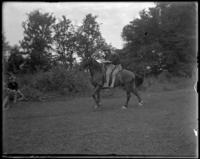Unidentified man transporting wounded on a horse during a sham battle, Bronx, N.Y. [?], undated.