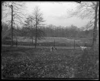 Axis deer [chital], New York Zoological Gardens [the Bronx Zoo], Bronx, N.Y., 1899. Horse-drawn carriage on Boston Road in background.
