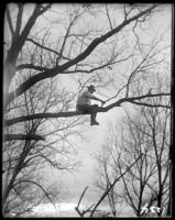 Man trimming branches in a tree, New York Zoological Gardens [the Bronx Zoo], Bronx, N.Y., 1899.