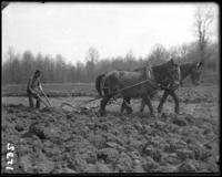 Plowing a field with a team of horses, New York Zoological Gardens [the Bronx Zoo], Bronx, N.Y., April 27, 1899.
