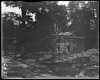 Lion cage under construction, New York Zoological Gardens [the Bronx Zoo], Bronx, N.Y., 1899.