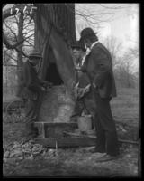 Nurserymen filling a tree cavity with stones and mortar, New York Zoological Gardens [the Bronx Zoo], Bronx, N.Y., 1899.
