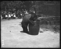 Bears in their cage, crowds watching, New York Zoological Gardens [the Bronx Zoo], Bronx, N.Y., 1899.