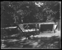 Bears beside an enclosure of herons, New York Zoological Gardens [the Bronx Zoo], Bronx, N.Y., 1899.