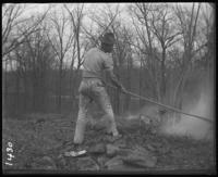 Workman burning leaves, New York Zoological Gardens [the Bronx Zoo], Bronx, N.Y., 1899.