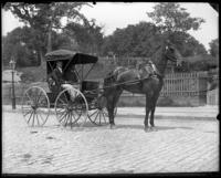Dr. Irving Balcom in his horse and buggy on Fordham Road, Bronx, N.Y., undated [c. 1902].