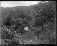 Men of the 2nd Battalion walking through heavy brush, State Camp (Camp Smith), Peekskill, N.Y., September 5-7, 1903.