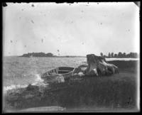 Moored rowboat Rob Roy being swamped, Orchard Beach, Bronx, N.Y., 1911.