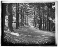 Wooded path, Bronx Park, Bronx, N.Y., 1903.
