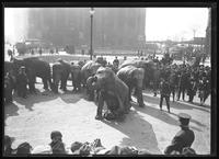 Elephants performing in a parade for United War Works in Bowling Green, New York City, undated [ca. November 1918].