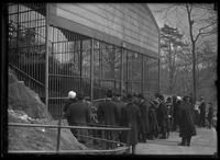 Crowds gathered around the polar bear cage in an unidentified zoo (Central Park Zoo?), New York City, undated (ca. 1913-1914).